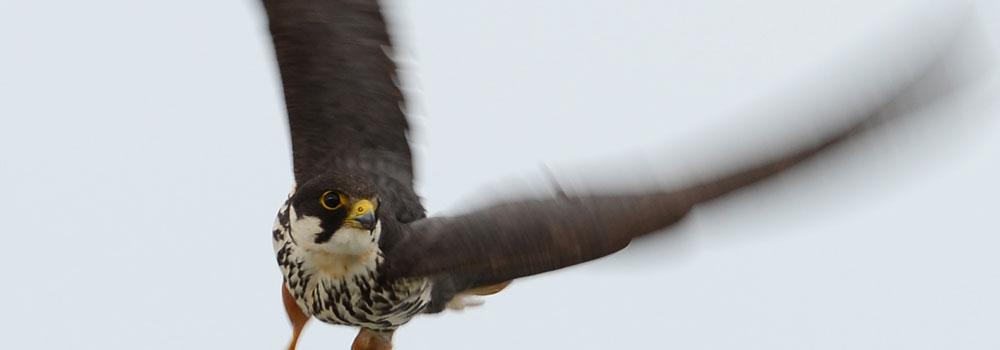 白神山地に生息する鳥類